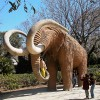 02_mamut.jpg